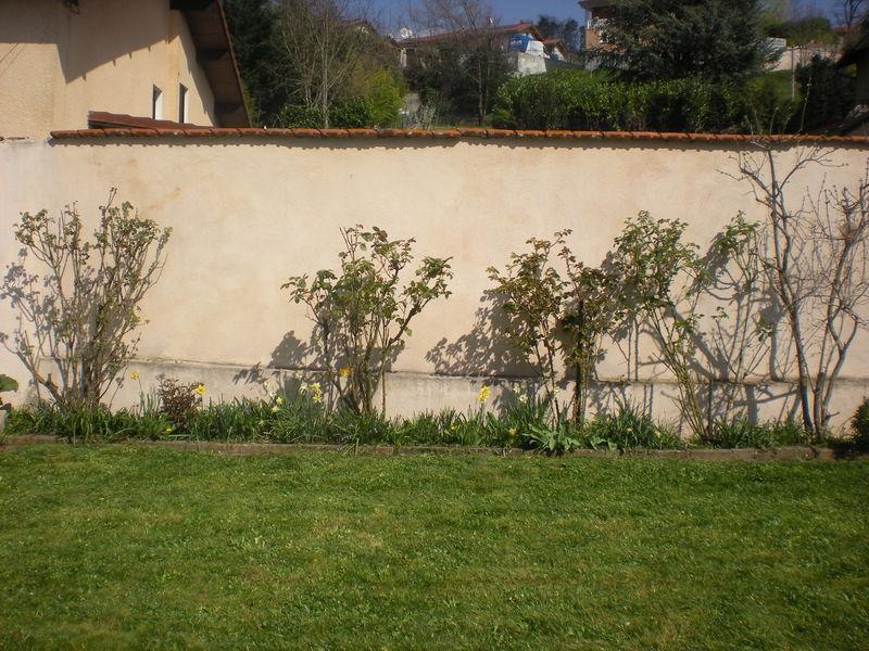 Dom 39 easy r alisations jardinage bourgoin jallieu for Devis tonte pelouse