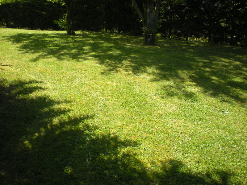 dom 39 easy r alisations entretien de gazon tonte de pelouse avec ramassage de l 39 herbe saint. Black Bedroom Furniture Sets. Home Design Ideas