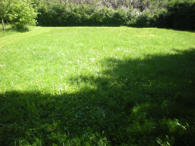 Dom 39 easy r alisations d broussaillage tonte de gazon for Service personne tonte pelouse