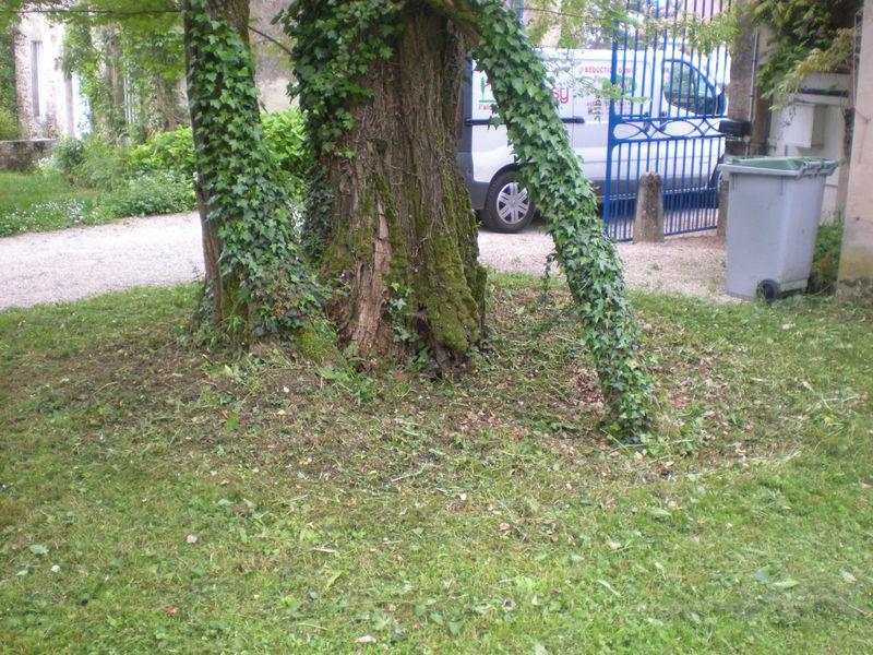 Dom 39 easy r alisations d broussaillage v n rieu for Devis tonte pelouse