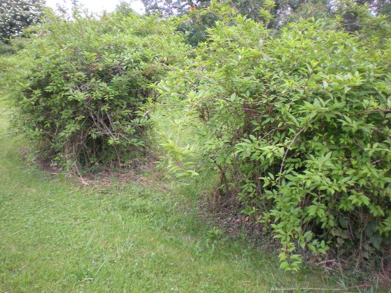 Dom 39 easy r alisations entretien de jardin v n rieu for Entretien de jardin service a la personne