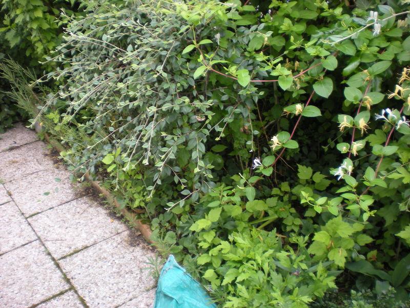 Dom 39 easy r alisations entretien de jardin bourgoin for Entretien jardin deductible des impots