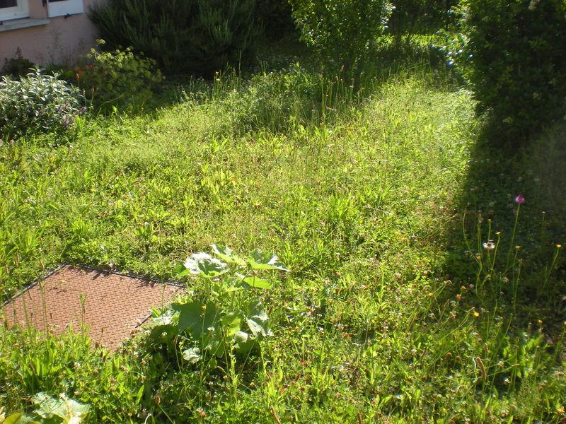 Dom 39 easy r alisations entretien de pelouse de gazon for Service de tonte de pelouse
