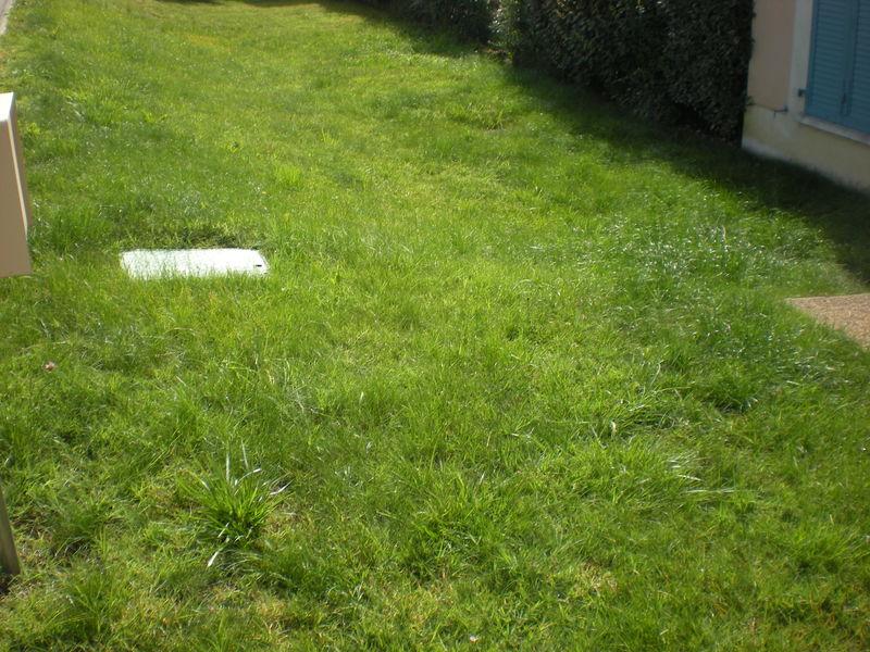 Dom 39 easy r alisations entretien de pelouse de gazon for Devis gazon