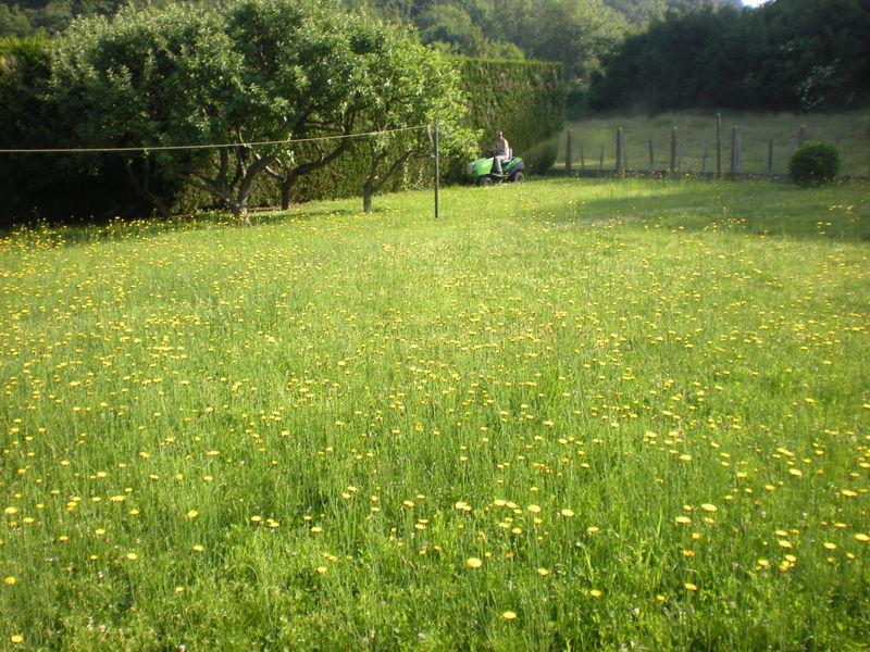 Entretien du gazon vue sur jardin gazon en rouleaux for Entretien gazon printemps