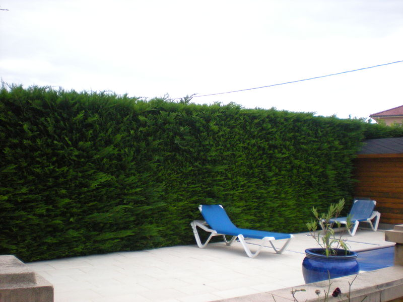 Dom 39 easy r alisations entretien de haie de thuyas la for Entretien de jardin service a la personne