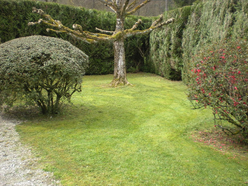 Dom 39 easy r alisations tonte de pelouse sans ramassage for Devis pelouse