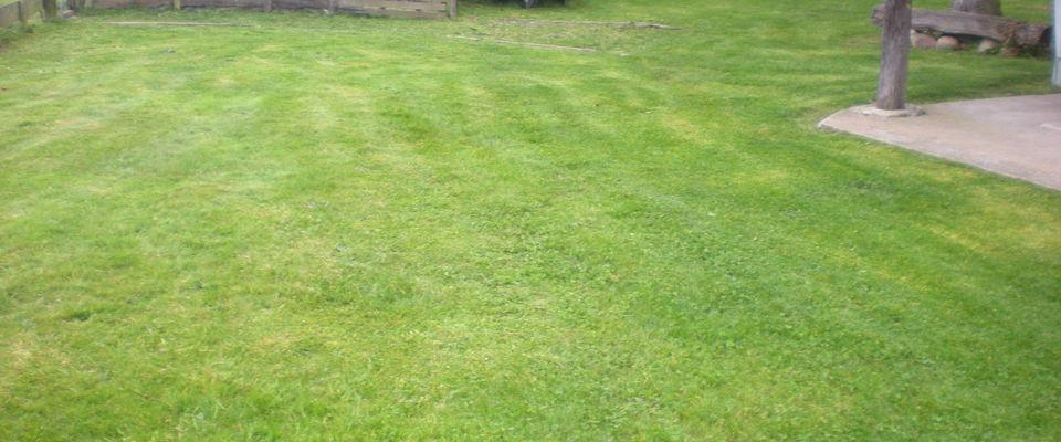 Dom 39 easy r alisations entretien de pelouse gazon for Service personne tonte pelouse