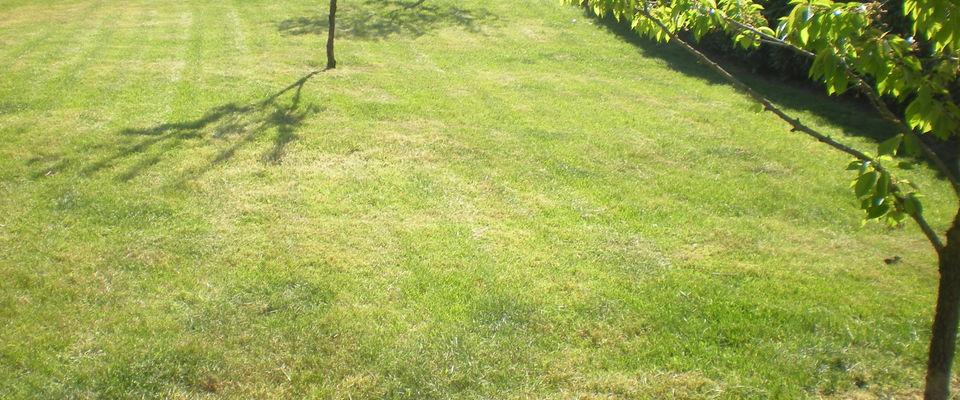 Dom 39 easy r alisations entretien de gazon tonte de for Tarif entretien pelouse