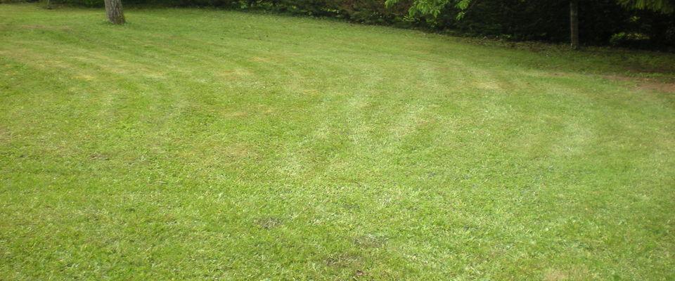 Dom 39 easy r alisations services la personne tonte de for Service personne tonte pelouse