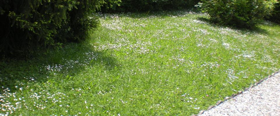 Dom 39 easy r alisations services la personne entretien for Devis pelouse