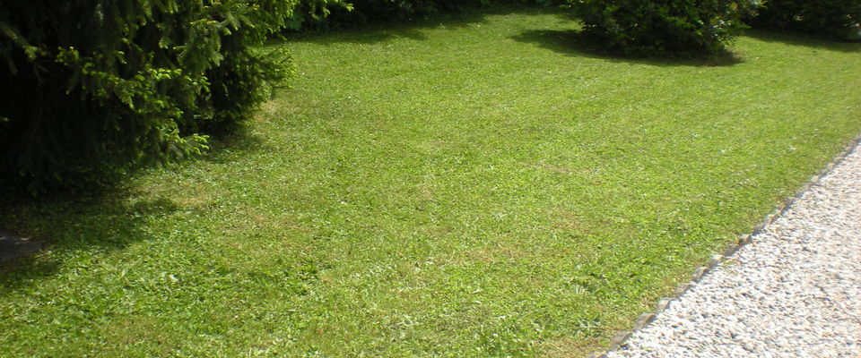 Dom 39 easy r alisations services la personne entretien for Service personne tonte pelouse
