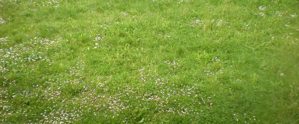 Dom 39 easy r alisations tonte pelouse avec ramassage du for Devis pelouse