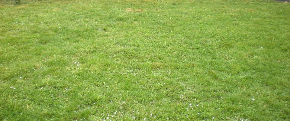 Dom 39 easy r alisations tonte pelouse avec ramassage du for Tarif entretien pelouse