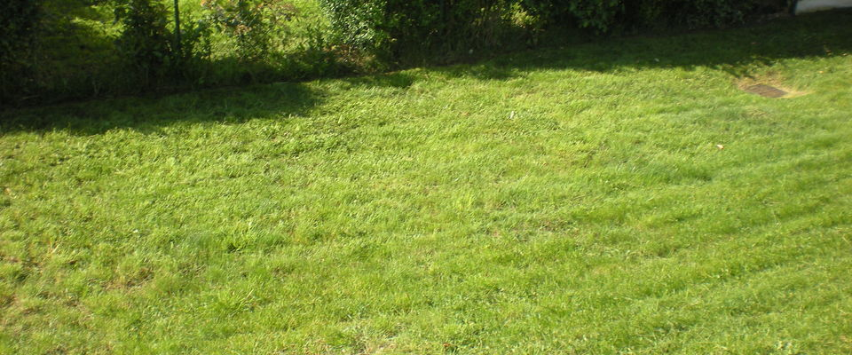 Dom 39 easy r alisations pour votre jardin tonte de for Devis pelouse