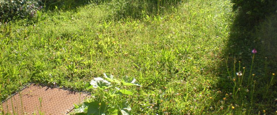 Dom 39 easy r alisations entretien de pelouse de gazon for Service personne tonte pelouse
