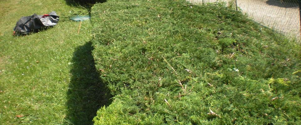 Dom 39 easy r alisations taille d 39 arbustes heyrieux for Recherche personne pour entretien jardin