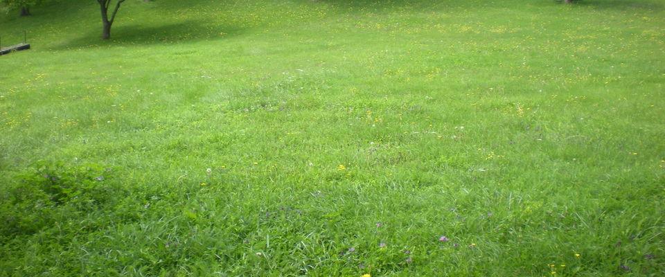 Dom 39 easy r alisations entretien jardin bourgoin for Entretien jardin 78