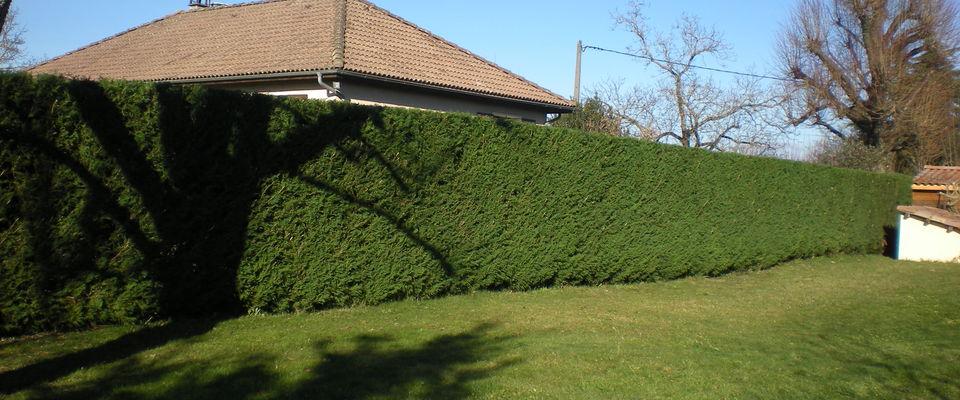 dom 39 easy r alisations taille de haie et entretien de pelouse avec ramassage d 39 herbe. Black Bedroom Furniture Sets. Home Design Ideas