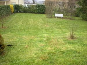 Dom 39 easy r alisations tonte de pelouse sans ramassage for Service personne tonte pelouse
